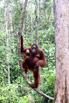 Tanjung Puting National Park Borneo